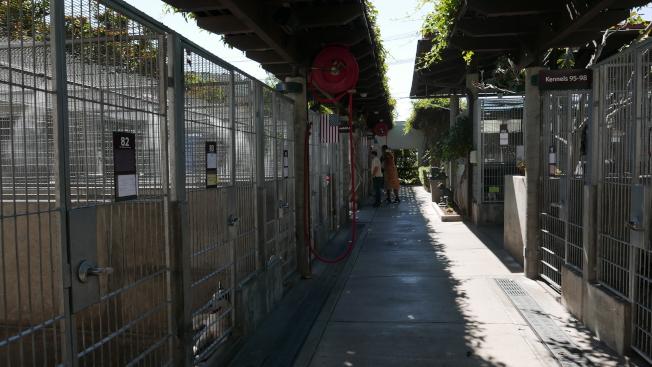 一些狗狗在收容所的環境中不適應變得焦慮。(記者李雪/攝影)