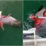 美國國鳥落難!遭巨大章魚「死亡纏繞」幸運獲救