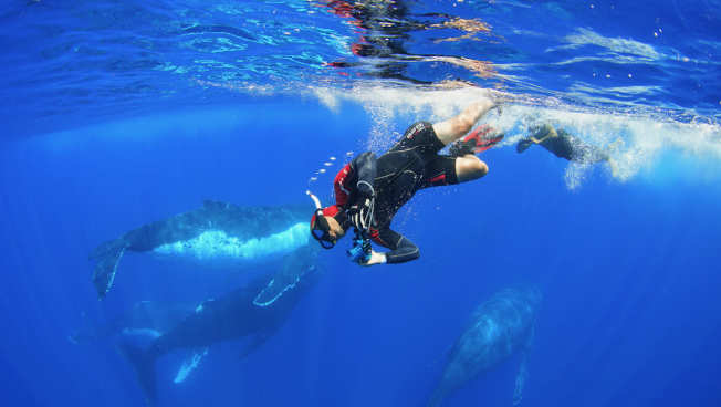 導演黃嘉俊因潛水興趣巧妙連接起拍攝紀錄片《男人與他的海》的契機。圖為潛入水下搶時機拍攝罕見的18隻大翅鯨共同移動。圖/貝殼放大提供