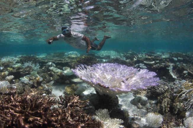 馬爾地夫是一系列環狀珊瑚礁組成,賣點是每個島都是度假勝地、半透明的碧綠海水以及原始珊瑚礁。(美聯社)