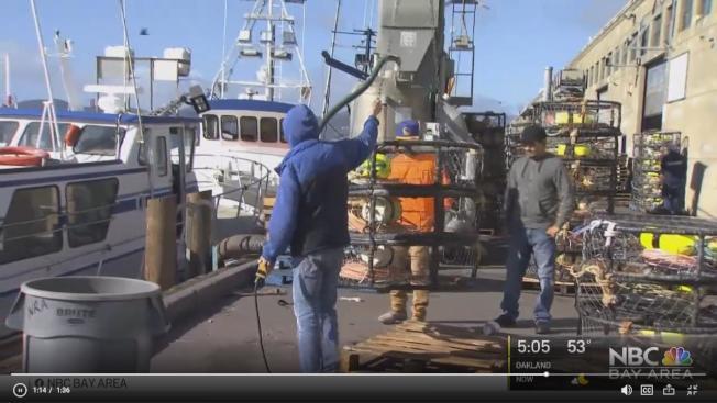 加州漁獵局宣布鄧金斯蟹商業捕撈季正式開始。(電視新聞截圖)