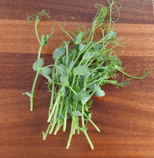 豌豆苗有時和龍鬚菜長得很像。(美聯社)