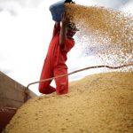 初步貿協達成後 中國恢復採購美國黃豆