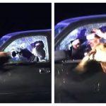 凶猛!嫌犯被攔拒下車 警犬直接飛撲進車窗逮人