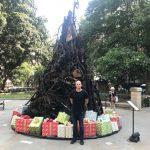 澳洲耶誕節象徵:燒焦的耶誕樹