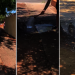 熱昏!貓頭鷹摔下樹 澳洲暖男澆水幫降溫
