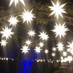 迷幻森林燈展 如入夢境……