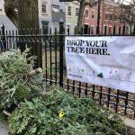 全市66個站點 26日起「耶誕樹回收」