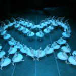 東方芭蕾「天鵝湖」豪華看點