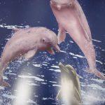生態示警 全台白海豚不到65隻、近半有傷