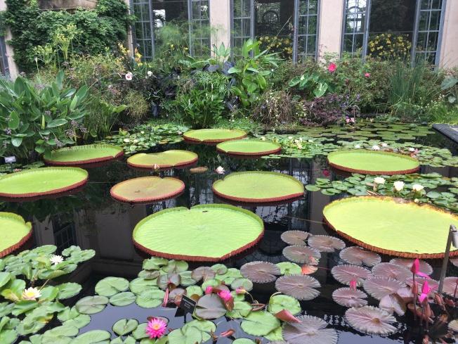 長木公園的荷塘蓮池睡蓮品種繁多。