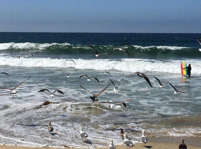南灣的托侖斯海灘。