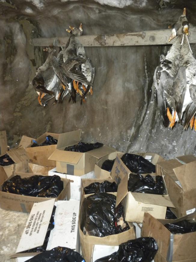 阿拉斯加傳統冰窖裡的庫存糧食。(美聯社)