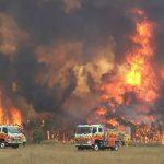 澳洲野火肆虐 動物園飼育員帶動物回家避難