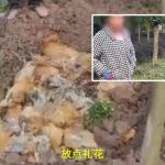 放鞭炮為父賀50歲生日 嚇死鄰居246隻雞