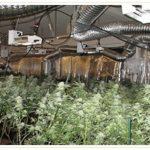 河濱縣警去年查獲4.6億元大麻