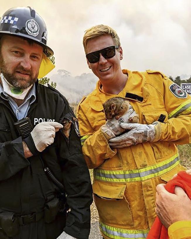 澳洲新南威爾斯州,一位消防員和一位警察在山火下救出一對負鼠母子。(美聯社)