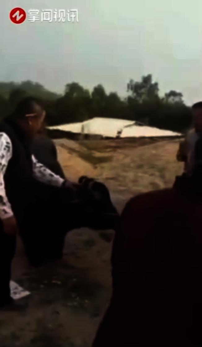 眾人拉著母牛,母牛下跪不起。(視頻截圖)