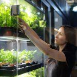 布碌崙海軍工廠「自家農場」 水培種植蔬菜享用