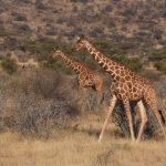 親睹動物大遷徙 東非自然奇觀之旅超震撼
