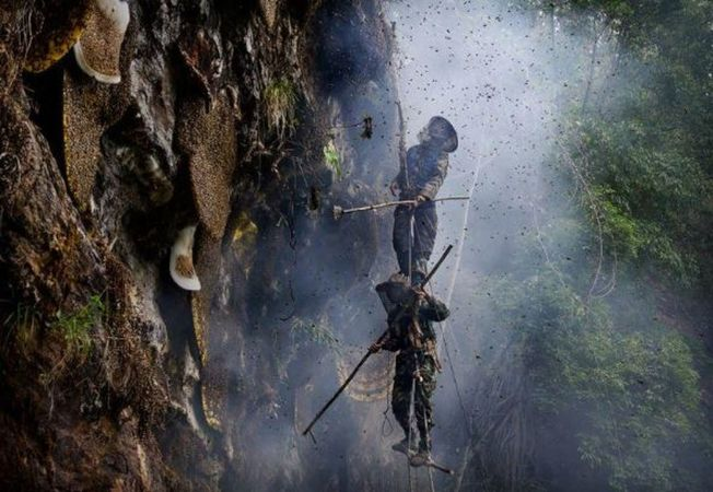 野生採蜜者懸掛懸崖邊,周圍是蜜蜂和煙霧。(取材自紅星新聞)