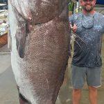 「只憑釣線及魚鉤」 佛州漁夫釣起350磅、50歲最老石斑