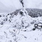 慢遊日本東北 泡湯賞雪啖美食  必去!藏王樹冰、銀山溫泉