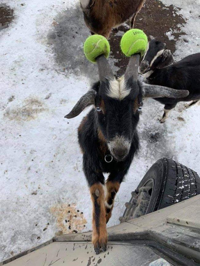 麥卡倫拍的小動物大受好評。(取材自臉書)