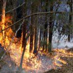 盼澆熄澳洲野火 持續性降雨得等到3月