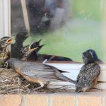 氣候變暖使鳥類變小?