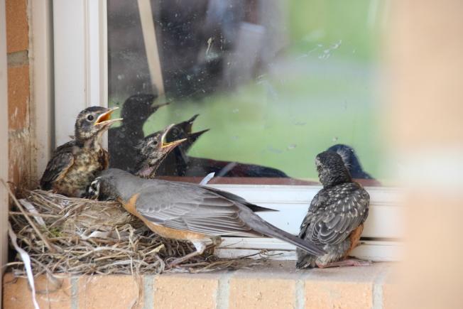 在所有鳥類中,踝骨的長度減少了2.4%。(本報檔案照)