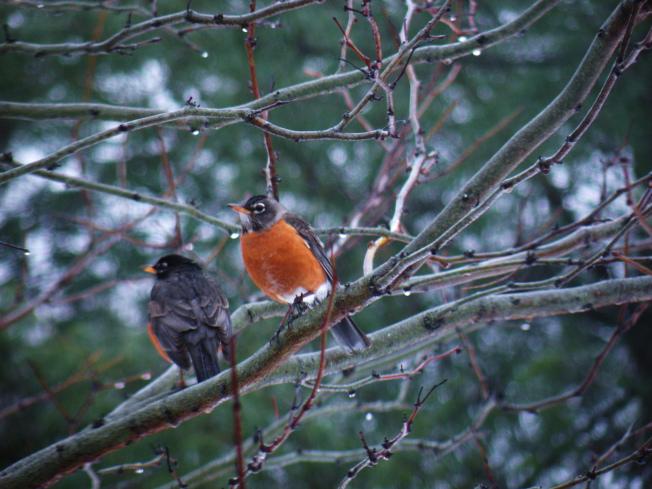 52個鳥類的體積和形狀均有下降。(本報檔案照)