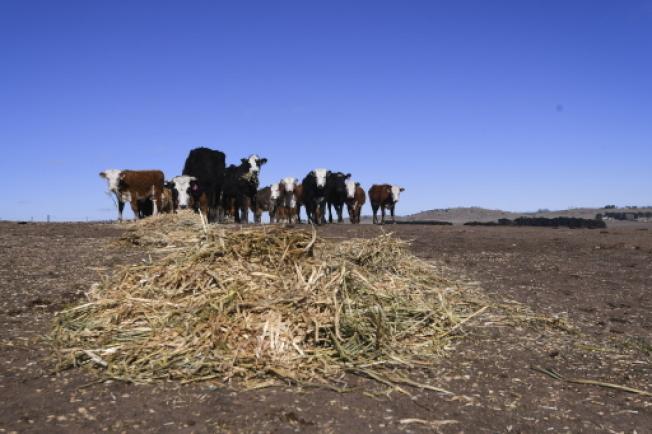 澳洲久旱,昆士蘭省南原區議會卻批准每年抽取9600萬公升地下水去生產瓶裝水,令當地農民不滿。(歐新社)