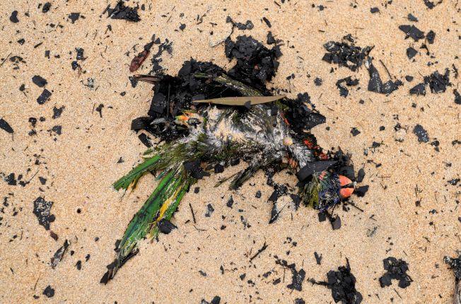 一隻澳洲原生種鳥類慘死野火之下,殘留的鳥喙和羽毛依稀可辨。路透