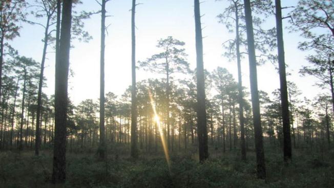 美國海軍在歐卡拉的國家森林做炸彈投擲演習。(美國森林服務局)