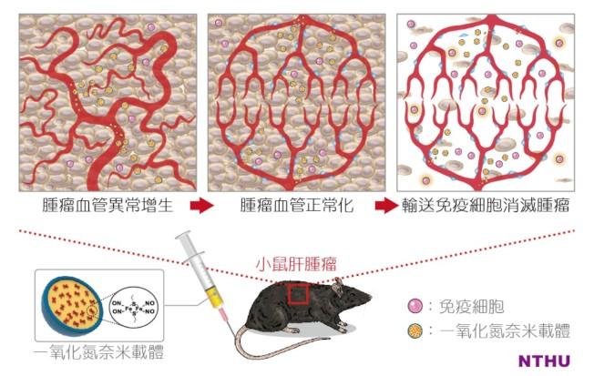 清大跨域研究團隊開發出可使腫瘤血管正常化的一氧化氮奈米載體。(圖/清大提供)
