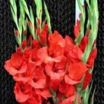 紐約花卉批發中心迎新春