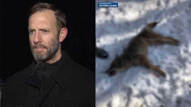 新罕布夏州居民歐萊里(左)為救兒子,徒手勒死土狼(右)。(WMUR電視台截圖)
