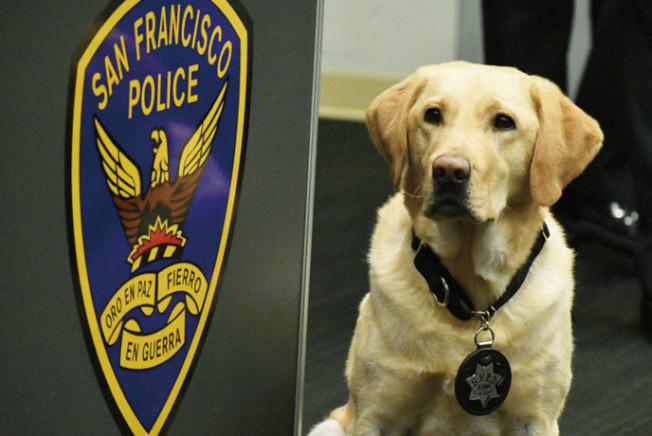 新加入警局服務的警犬Samson,專責搜索槍械,獲得警察局長史考特頒授警員執勤徽章。(記者李秀蘭/攝影)
