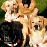 導盲犬成新州州犬 全美首例