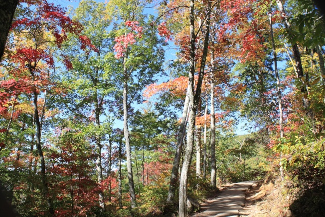 月桂樹瀑布步道。