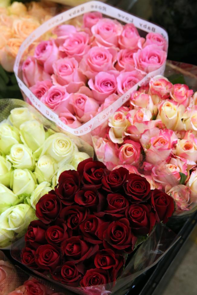 玫瑰花。記者徐兆玄/攝影