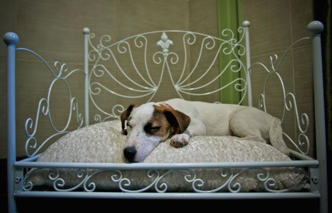 常常覺得累得跟狗一樣,可能是壞習慣影響了精神建康。 (Getty Images)