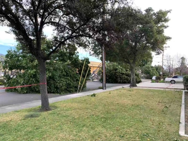 亞市大華超市附近多棵大樹被吹倒。(讀者提供)