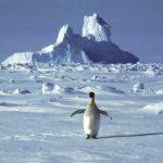 南極最熱的一天 18.3℃再創高溫紀錄
