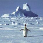 南極洲溫度創新高 攝氏18.2度跟台北一樣暖