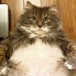 28磅肥貓 尋找瘦身夥伴
