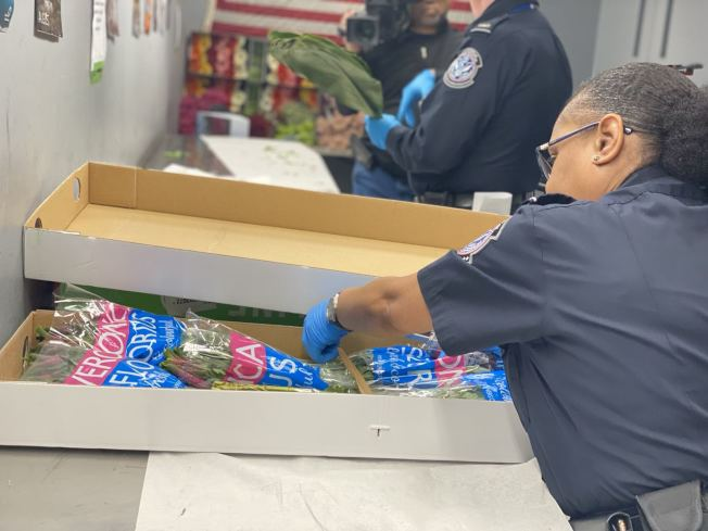 CBP农业部的专员在情人节期间检查花束。(记者牟兰/摄影)