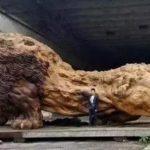 花20萬元把中國巨獅雕像運美? 美老男慘遇「情人劫」