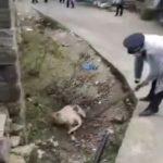 溫州小村爆疫情 當局不僅封村還屠殺…